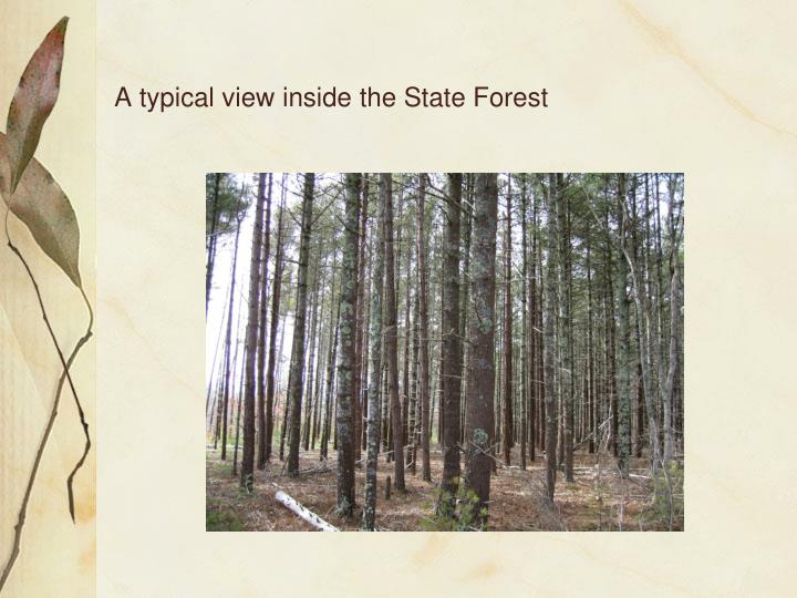 A typical view inside the state forest