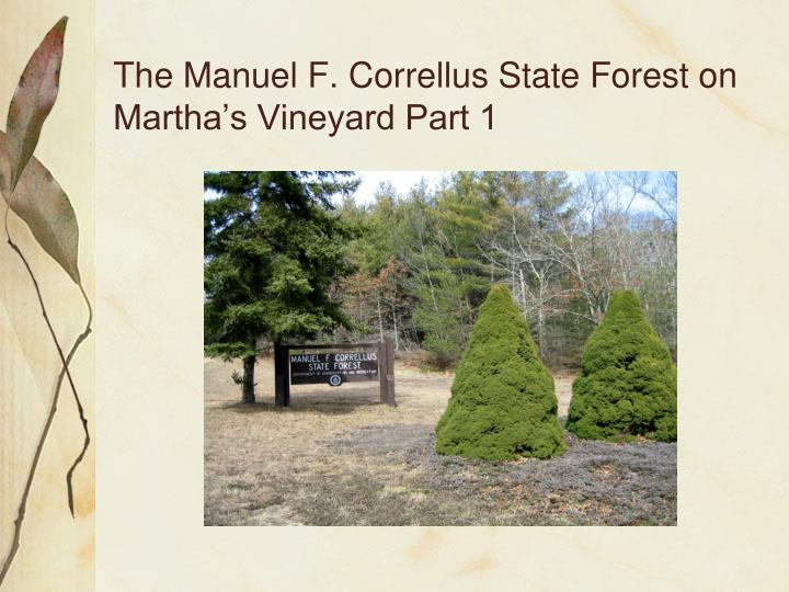The manuel f correllus state forest on martha s vineyard part 1