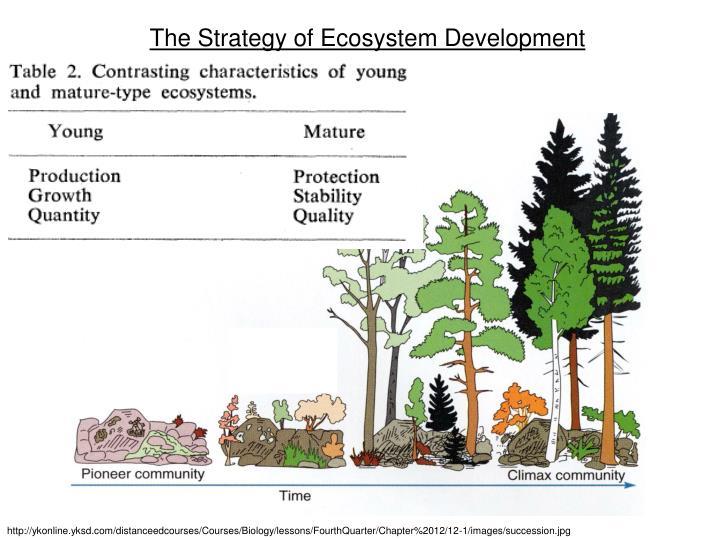 The Strategy of Ecosystem Development