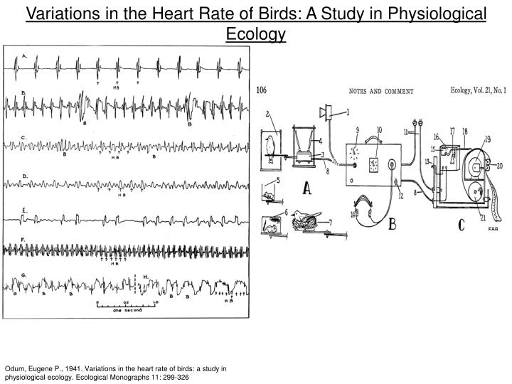 Variations in the Heart Rate of Birds: A Study in Physiological Ecology