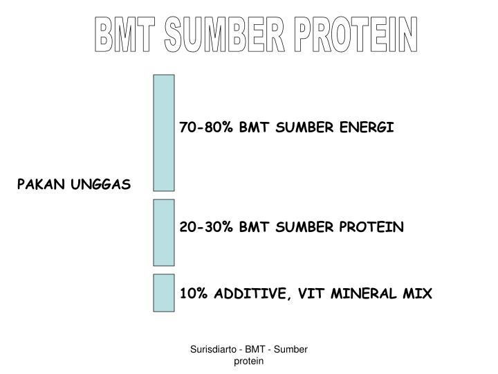 BMT SUMBER PROTEIN