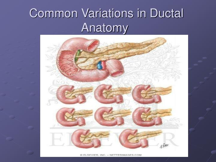 Common Variations in Ductal Anatomy