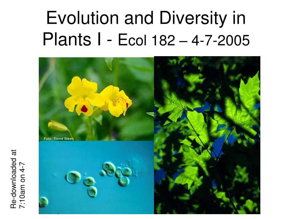 evolution and diversity in plants i e col 182 4 7 2005 l.