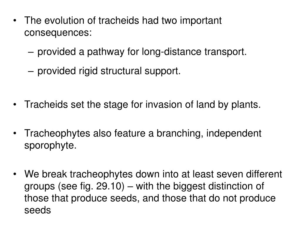 The evolution of tracheids had two important consequences: