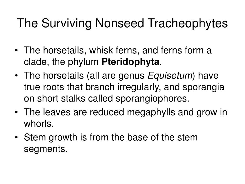 The Surviving Nonseed Tracheophytes