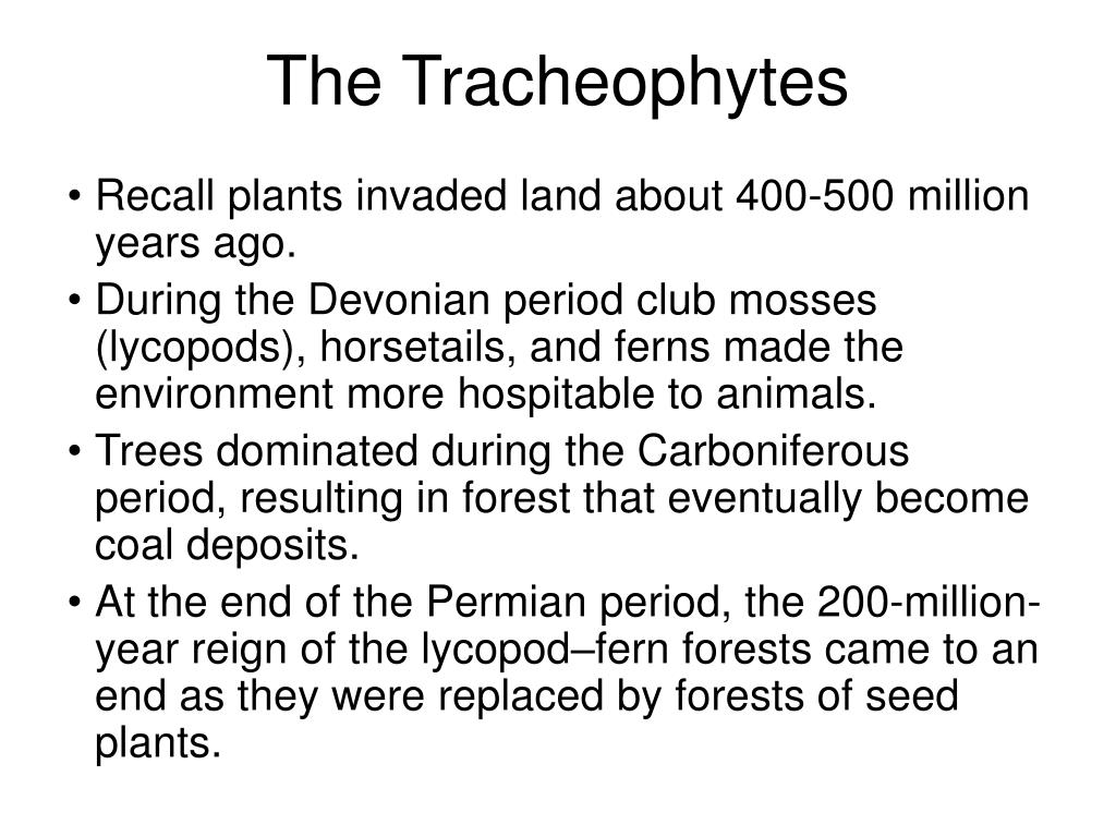The Tracheophytes