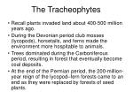 the tracheophytes31