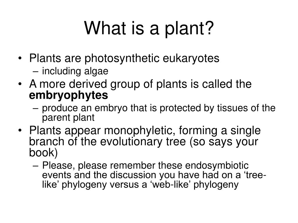 What is a plant?