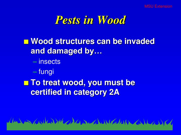 Pests in Wood