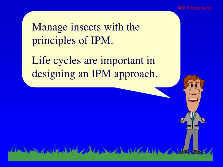 Manage insects with the principles of IPM.
