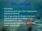 what is arthropods