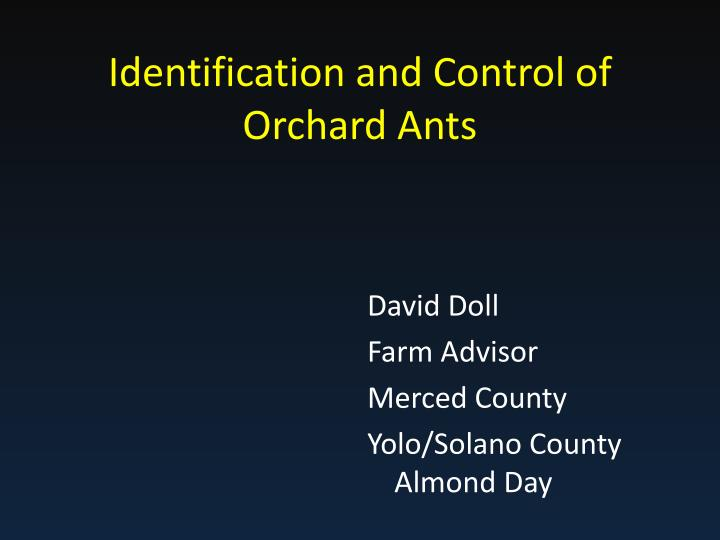 identification and control of orchard ants n.