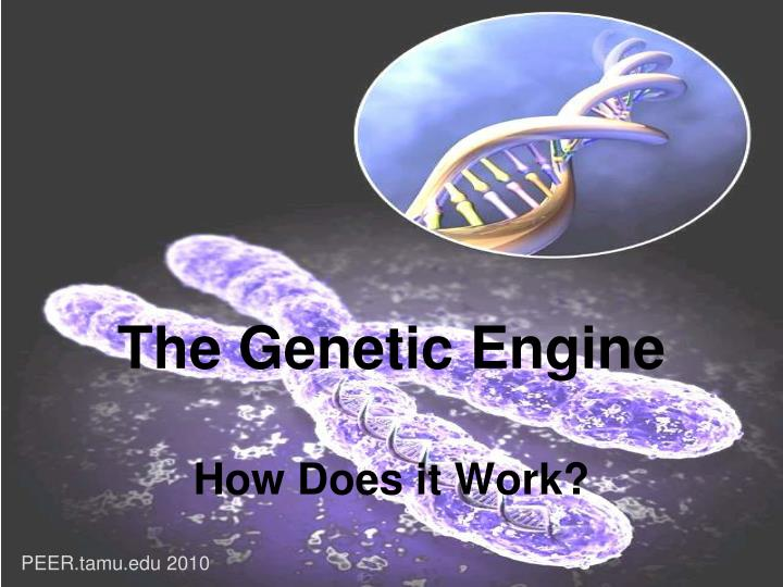the genetic engine how does it work n.