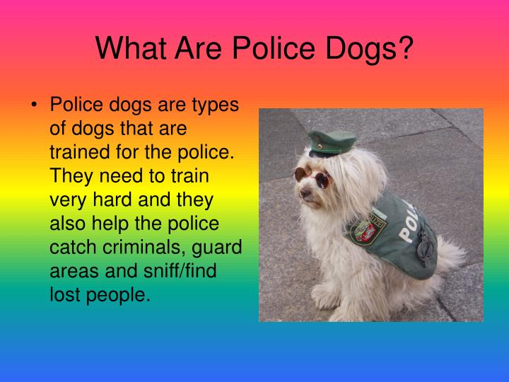 What are police dogs