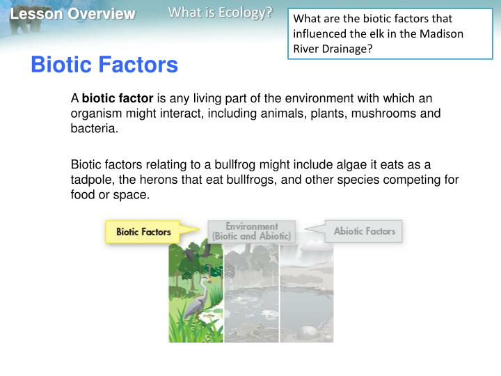 What are the biotic factors that influenced the elk in the Madison River Drainage?