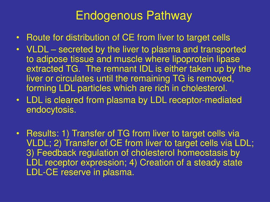 Endogenous Pathway