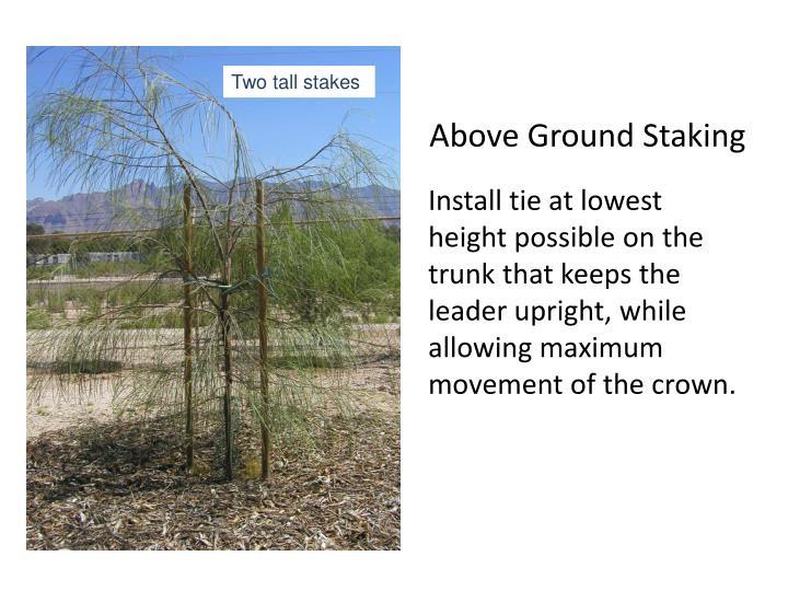 Above Ground Staking