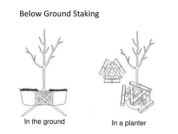 Below Ground Staking