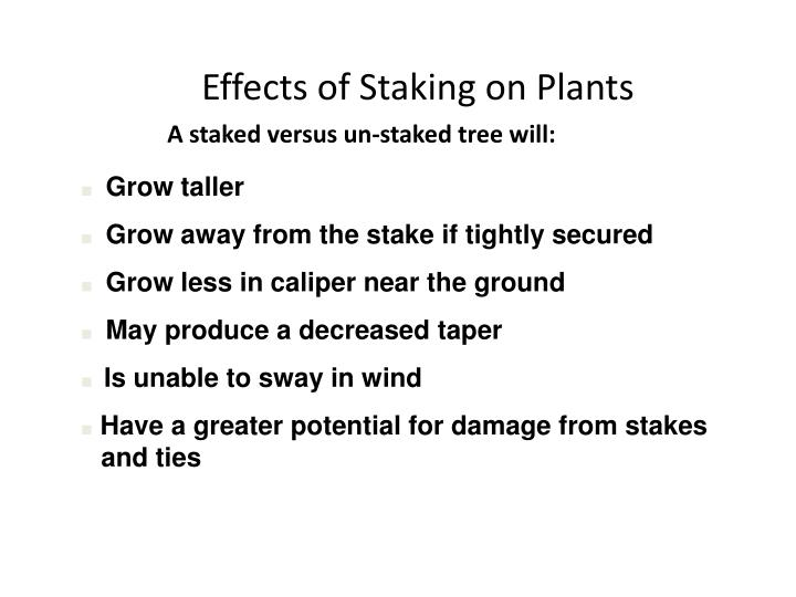 Effects of Staking on Plants