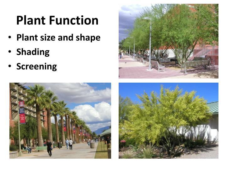 Plant Function