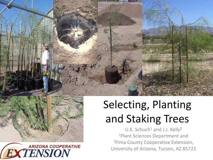 Selecting planting and staking trees