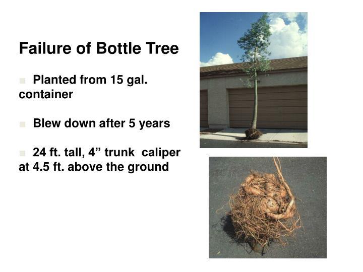 Failure of Bottle Tree