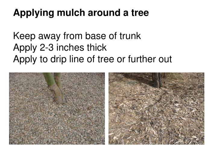 Applying mulch around a tree