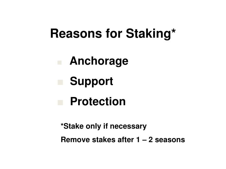 Reasons for Staking*