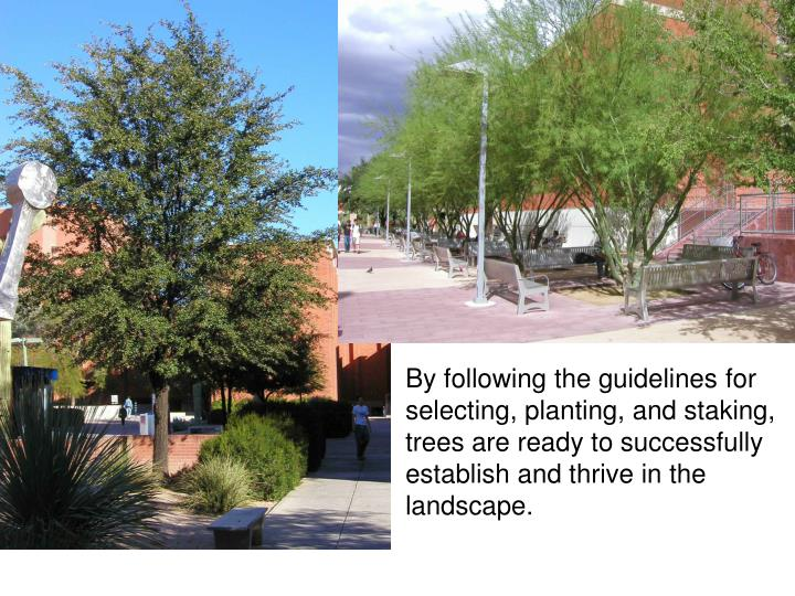 By following the guidelines for selecting, planting, and staking, trees are ready to successfully establish and thrive in the landscape.