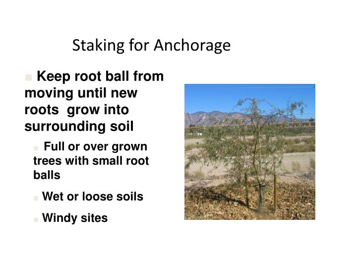Staking for Anchorage