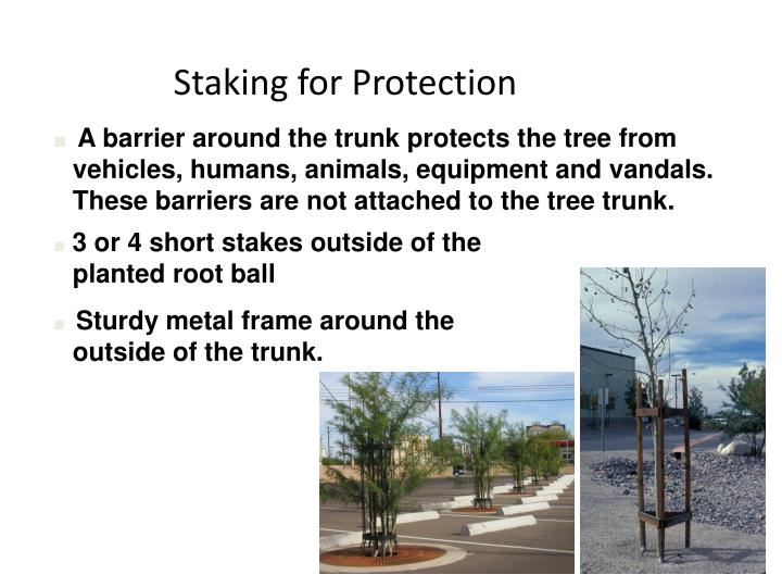 Staking for Protection