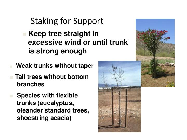 Staking for Support