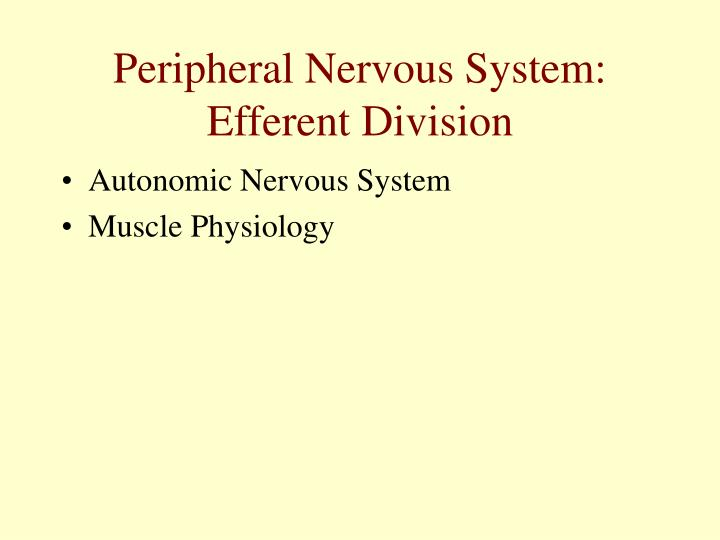 peripheral nervous system efferent division