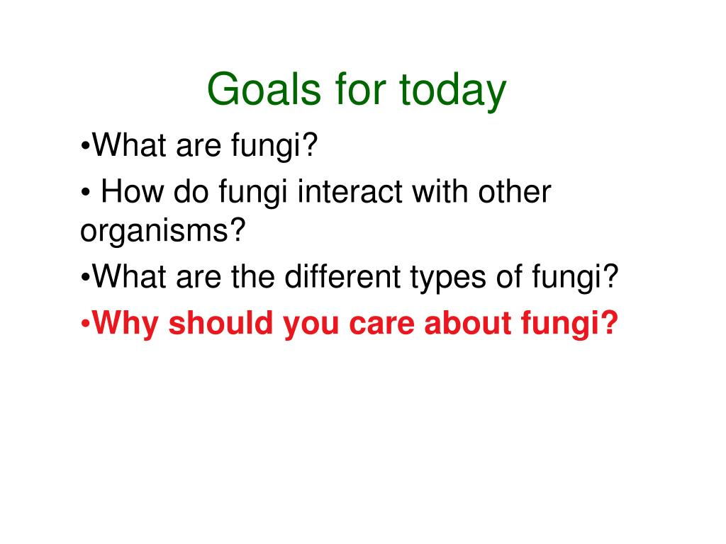 PPT - Introduction to the Fungi PowerPoint Presentation ...