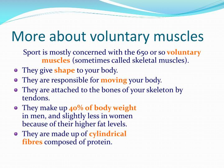 More about voluntary muscles