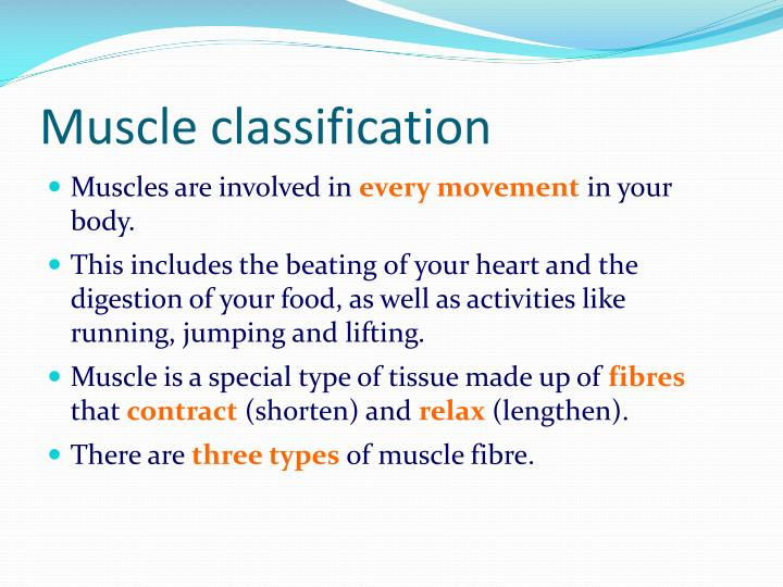 Muscle classification