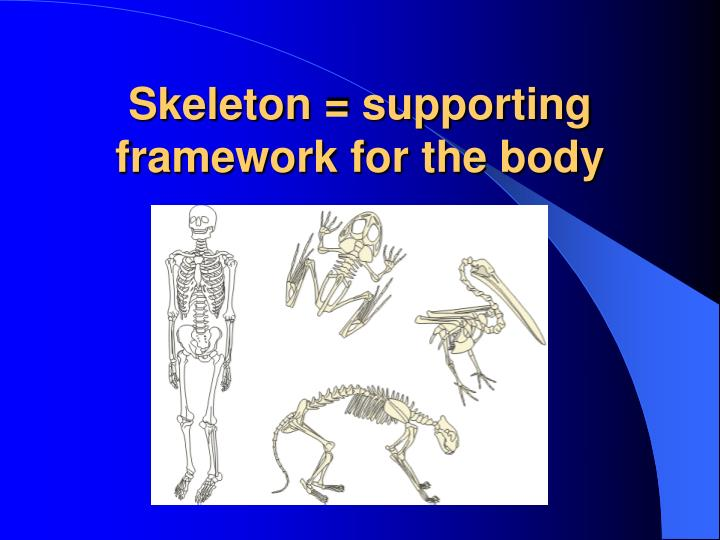 Skeleton = supporting framework for the body