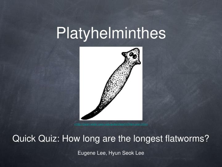 platyhelminthes n.