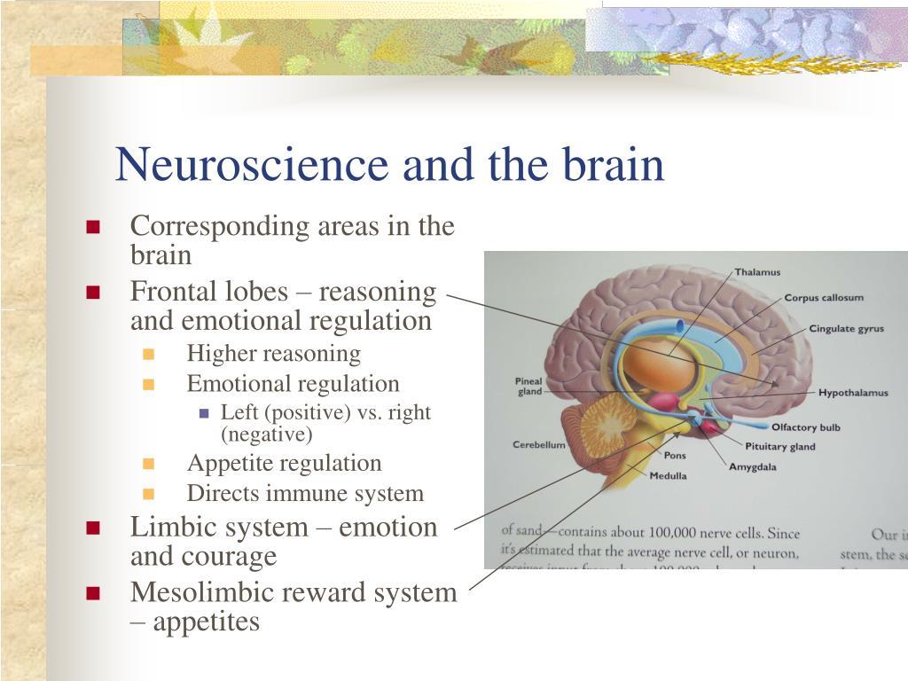 Corresponding areas in the brain