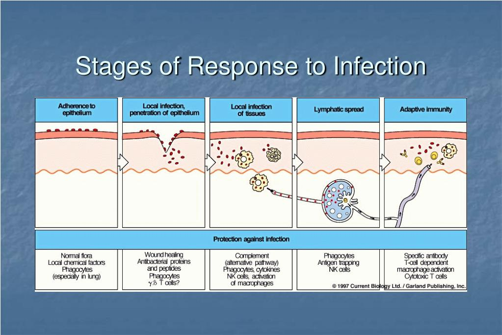 Stages of Response to Infection