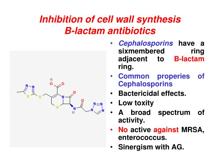 Inhibition of cell wall synthesis