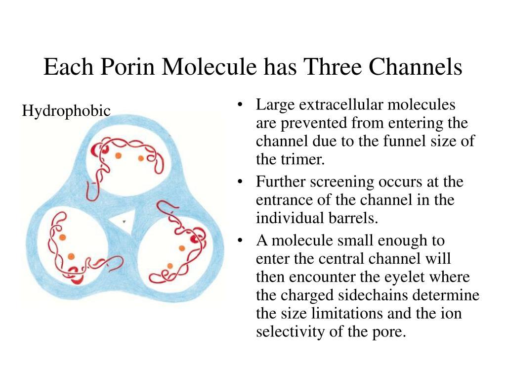 Each Porin Molecule has Three Channels