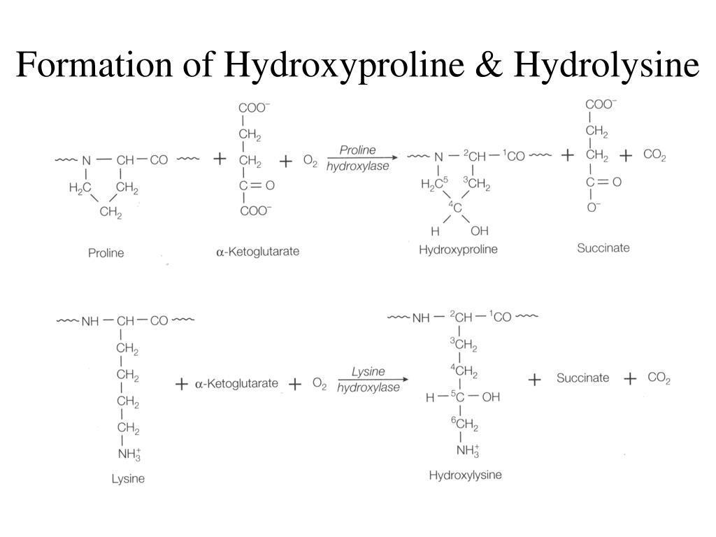 Formation of Hydroxyproline & Hydrolysine