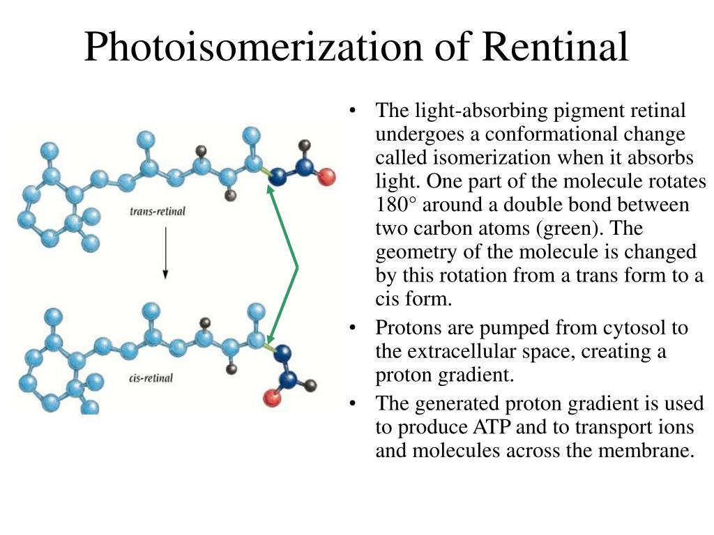 Photoisomerization of Rentinal