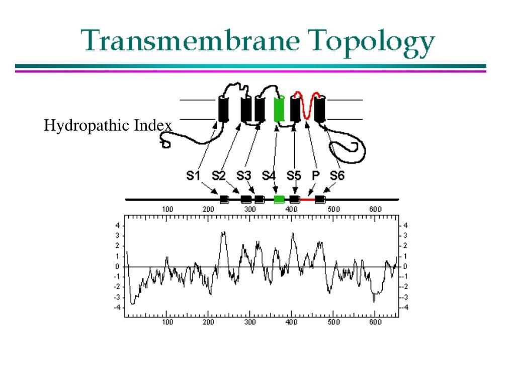 Hydropathic Index