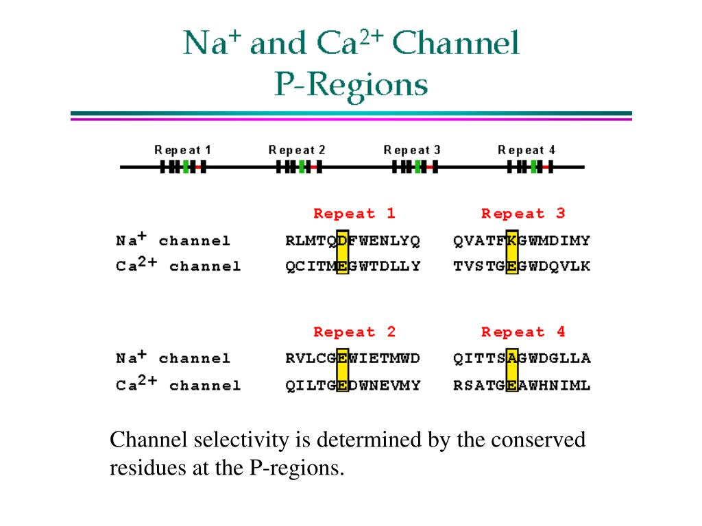 Channel selectivity is determined by the conserved