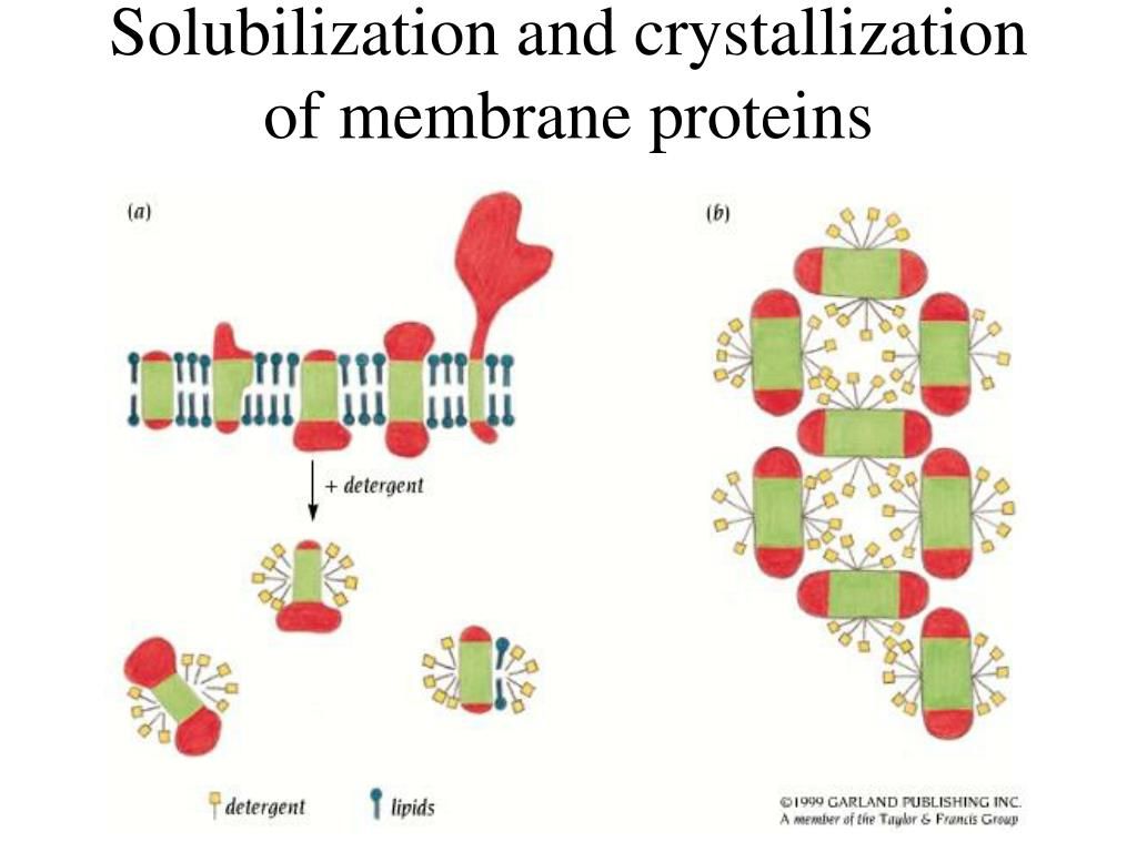 Solubilization and crystallization of membrane proteins