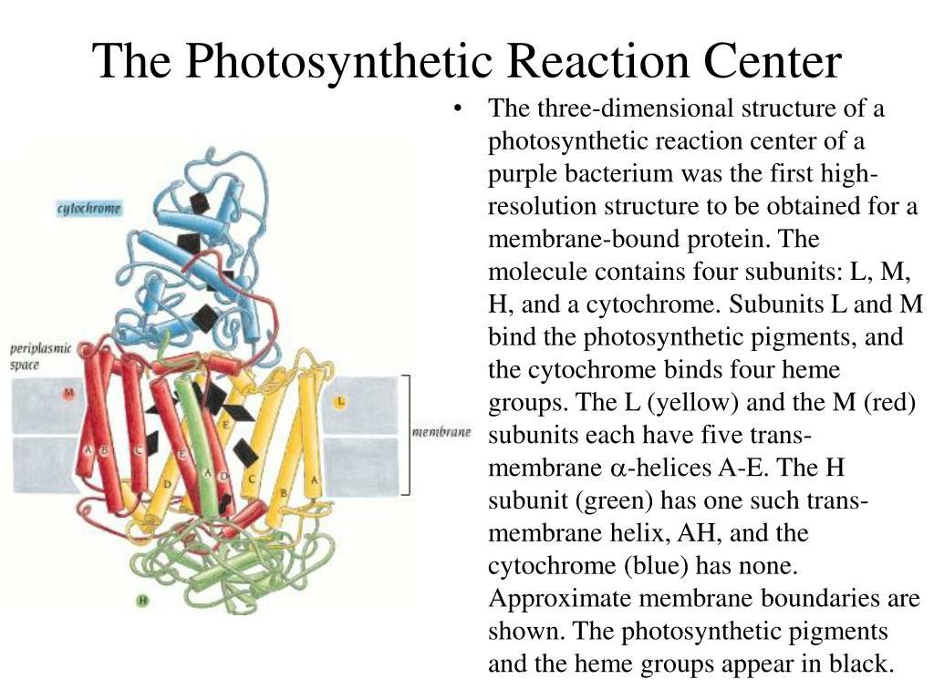 The Photosynthetic Reaction Center