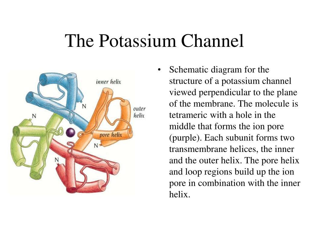 The Potassium Channel