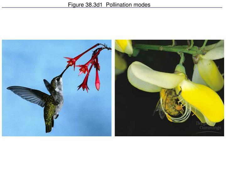 Figure 38.3d1  Pollination modes